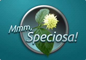 Mmm Specisoa Logo from Facebook