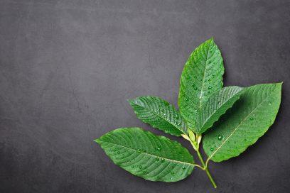 bio botanical kratom vendor review