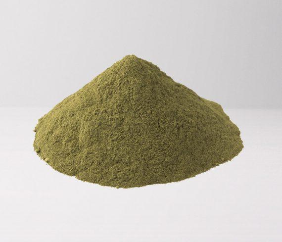 Green Hulu Kapuas - The Golden Monk