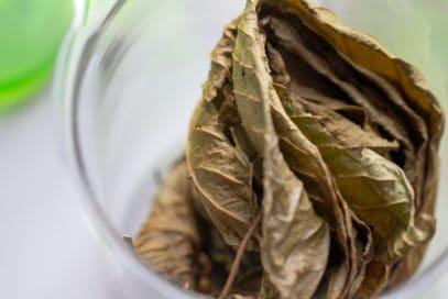 Dried green vein kratom in a glass jar on white background