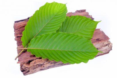 Kratom leaves on bark