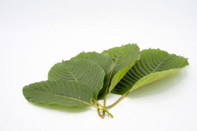 Kratom leaves are available in Honolulu.