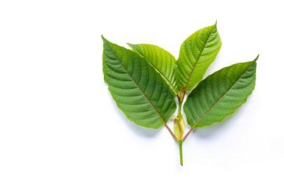 Kratom leaves are legal in Bridgeport.
