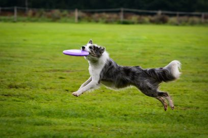 Dog catches Bridgeport made Frisbee.